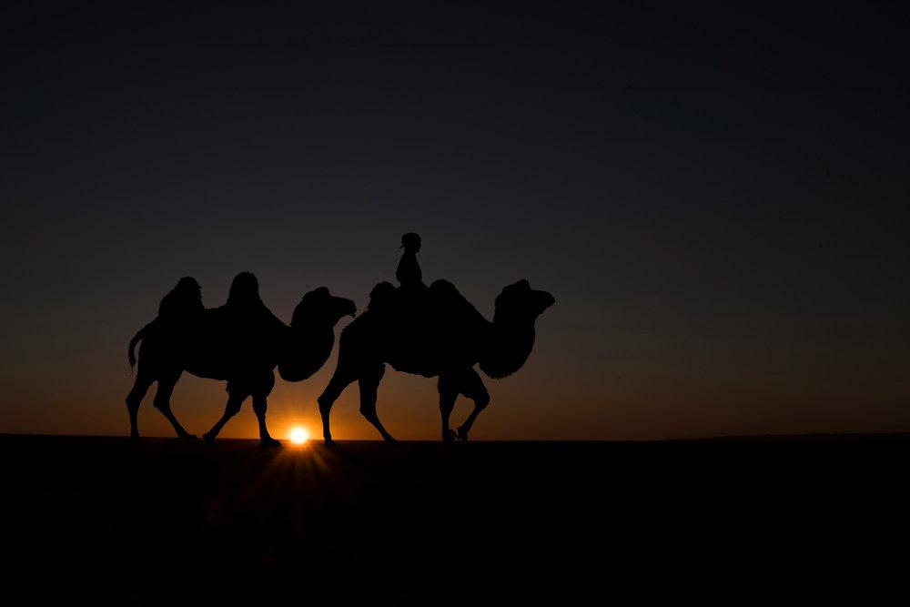 starburst camel in gobi-X4.jpg