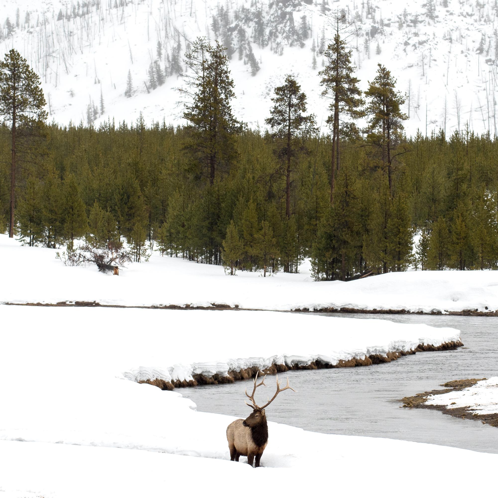 Yellowstone-2695.jpg