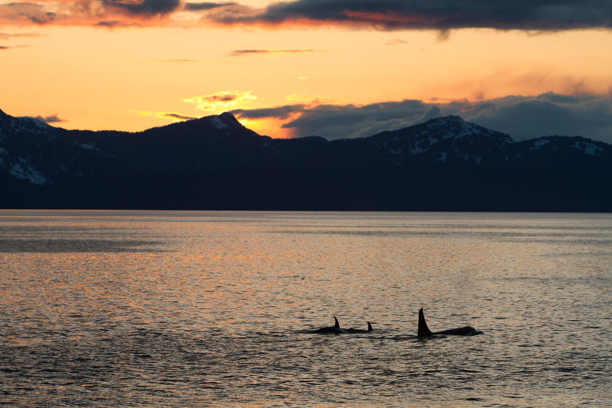 Alaska7D-7573.jpg