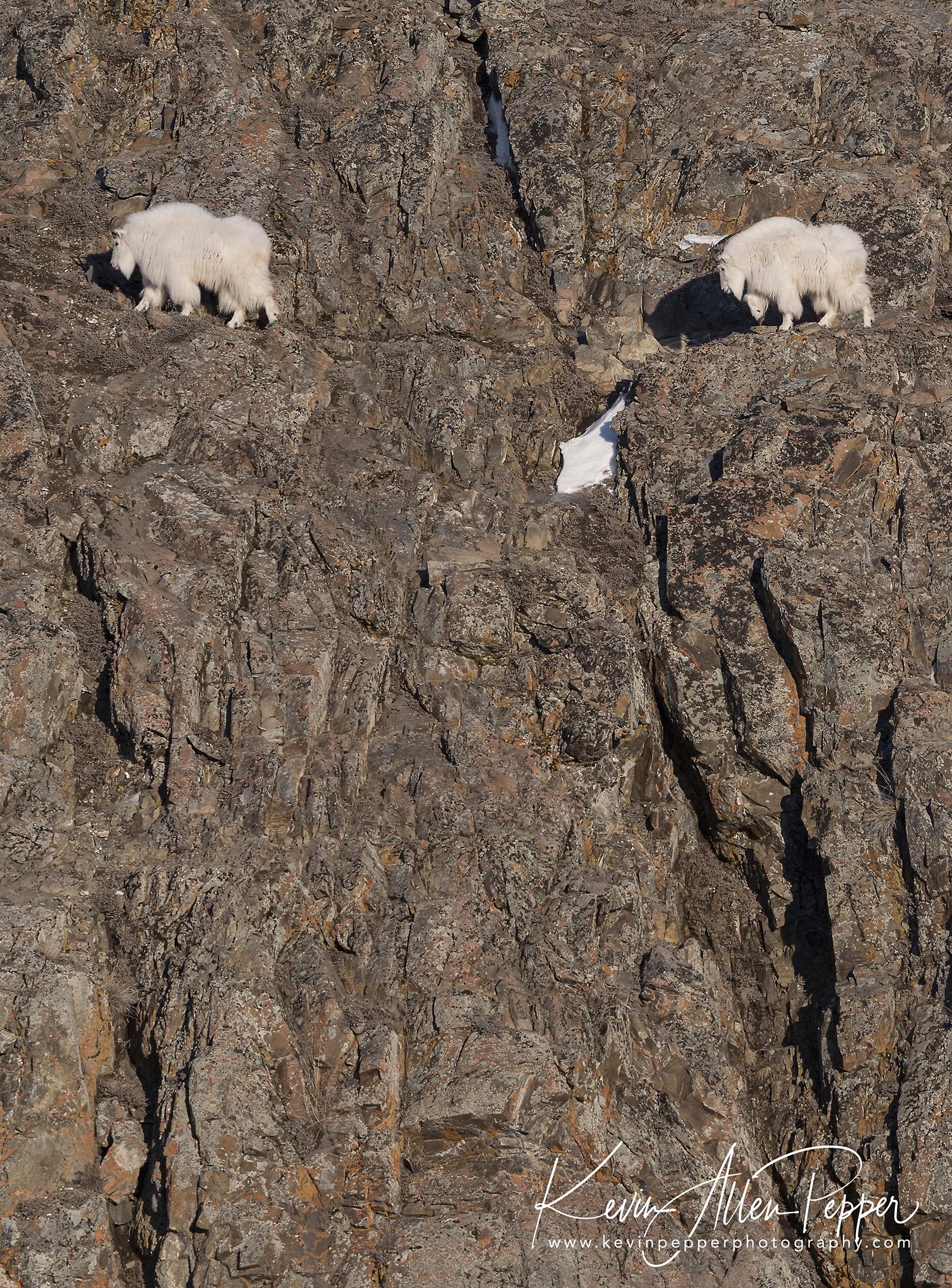 mountain goats_G9.jpg