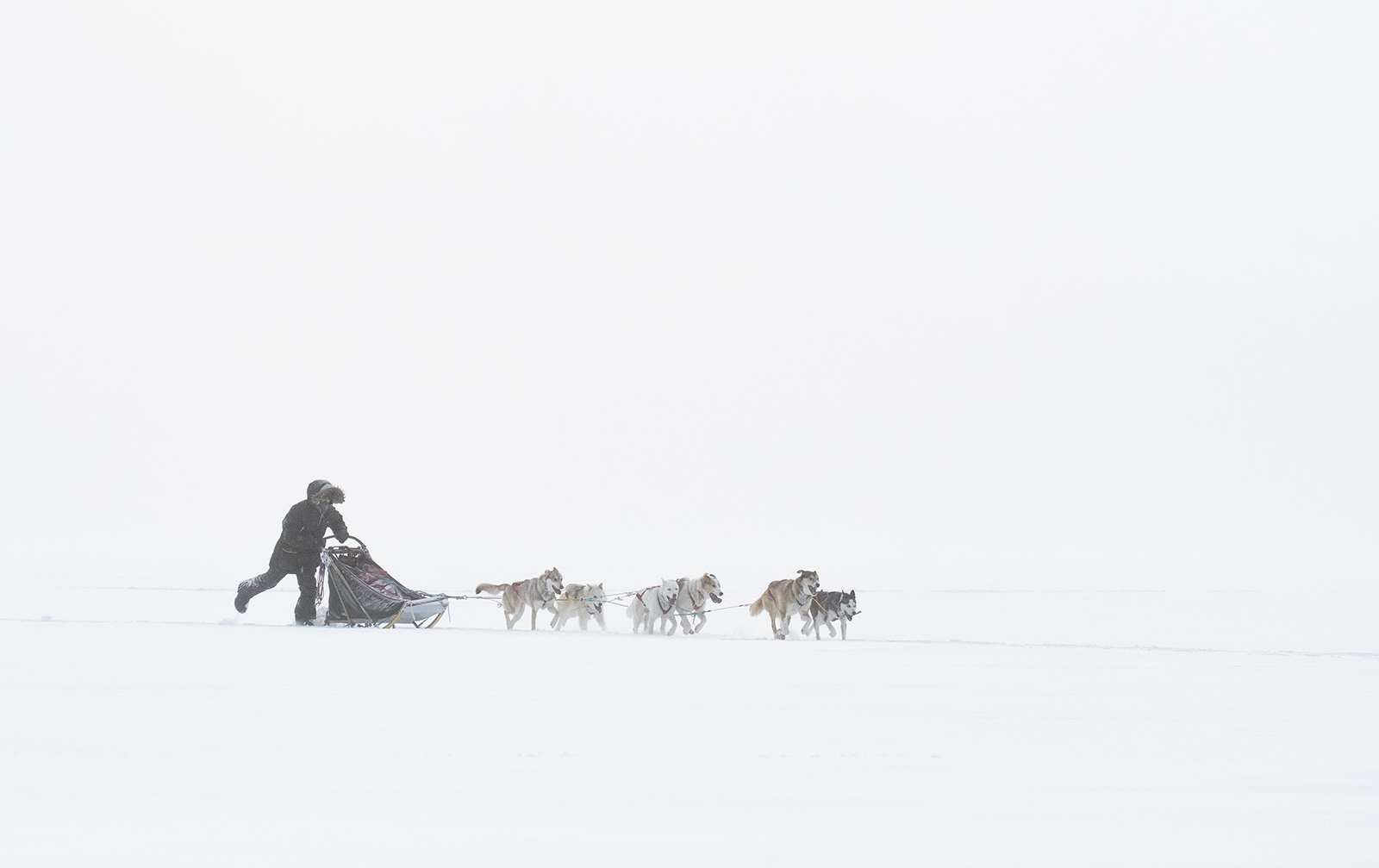 morgan and his dog team coming out of the snow.jpg