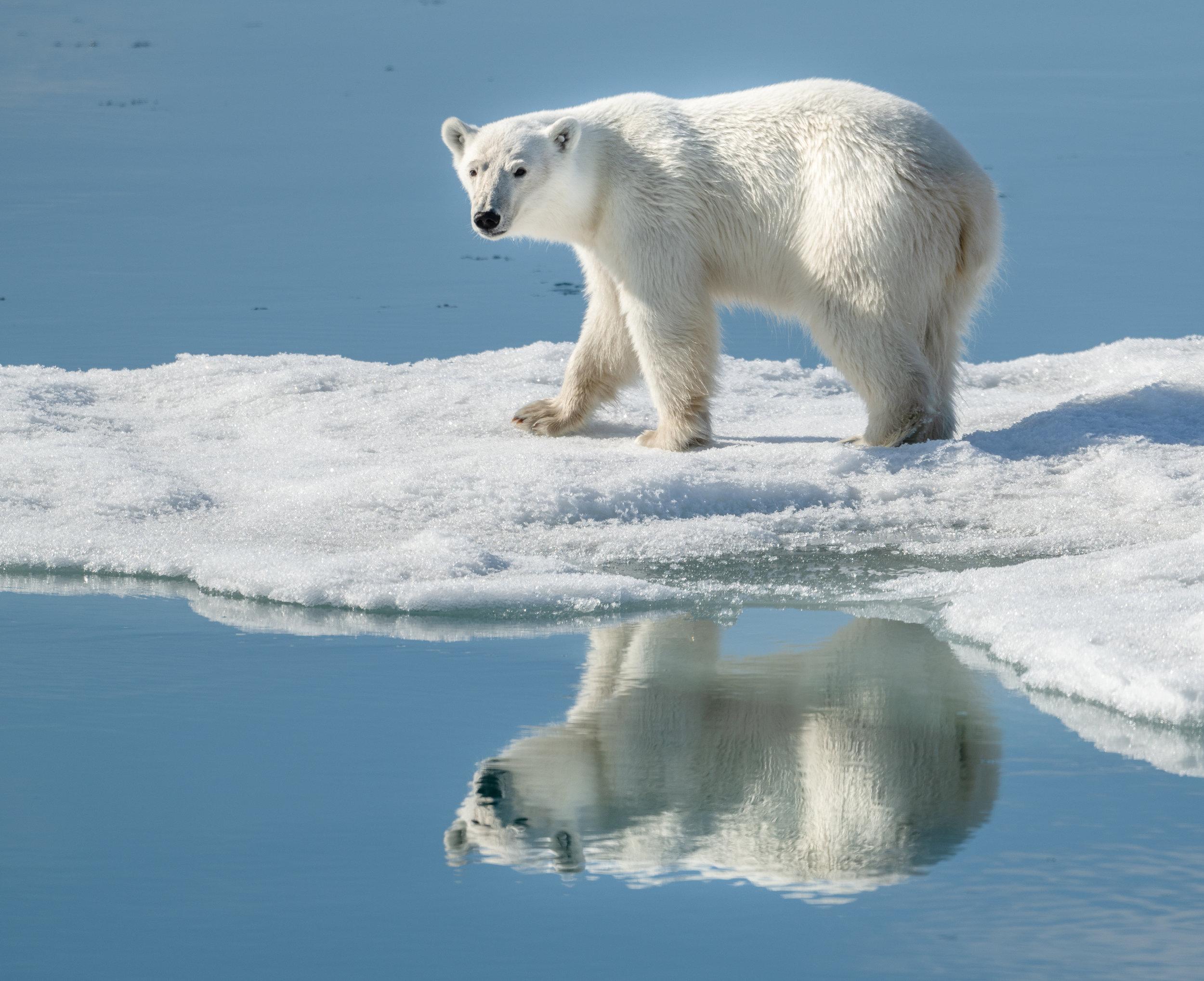 Svalbard-0761.jpg