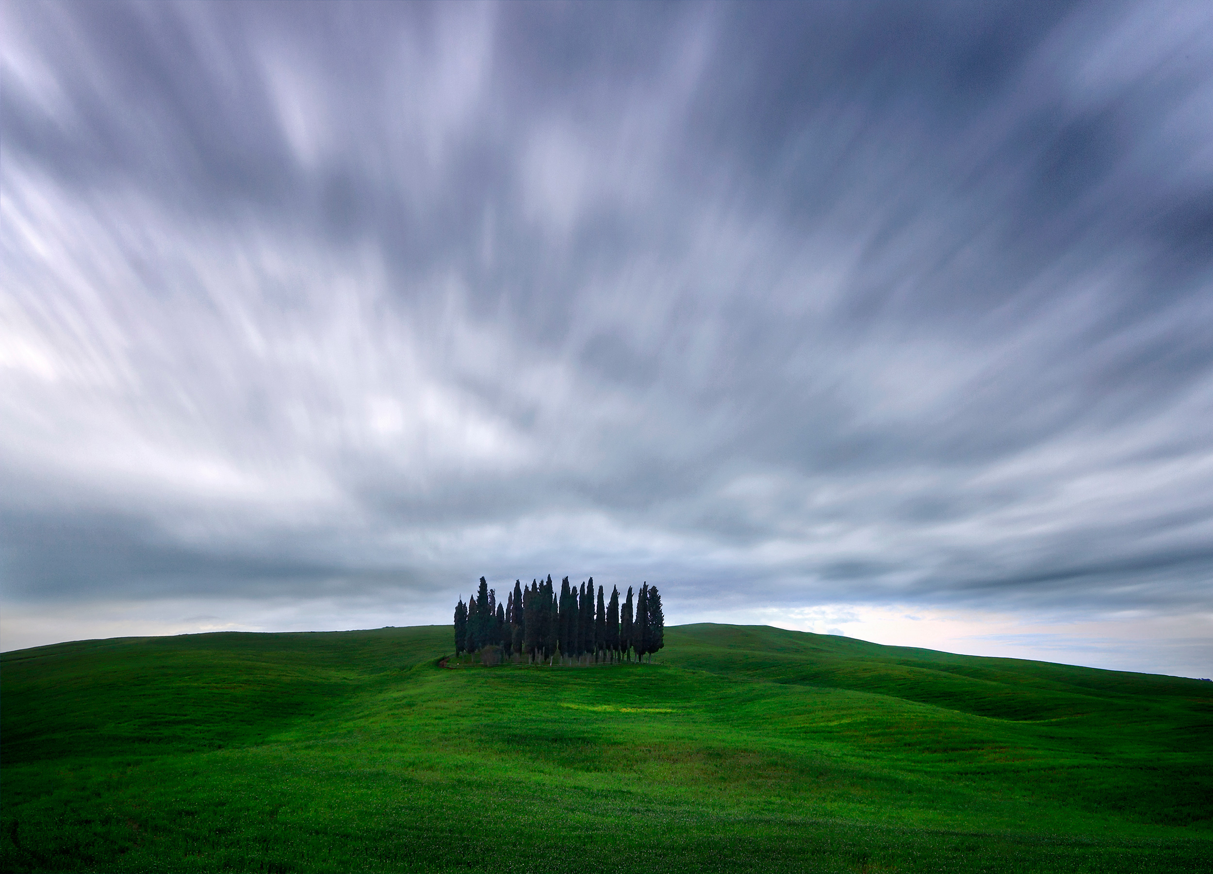 Cypress trees of San Quirico d'Orcia - Valdorcia, Tuscany, Italy