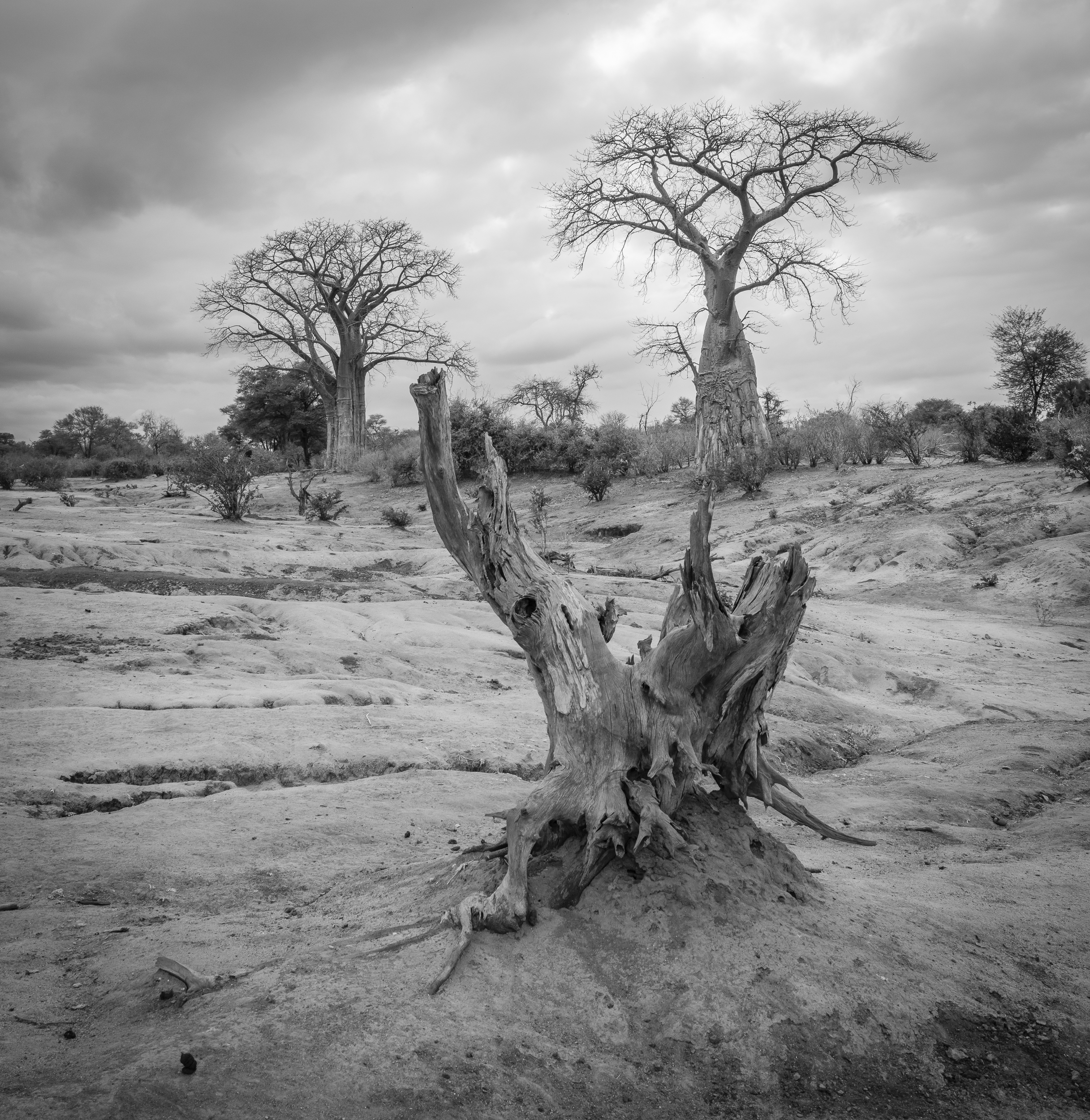 Zambia-2197.jpg