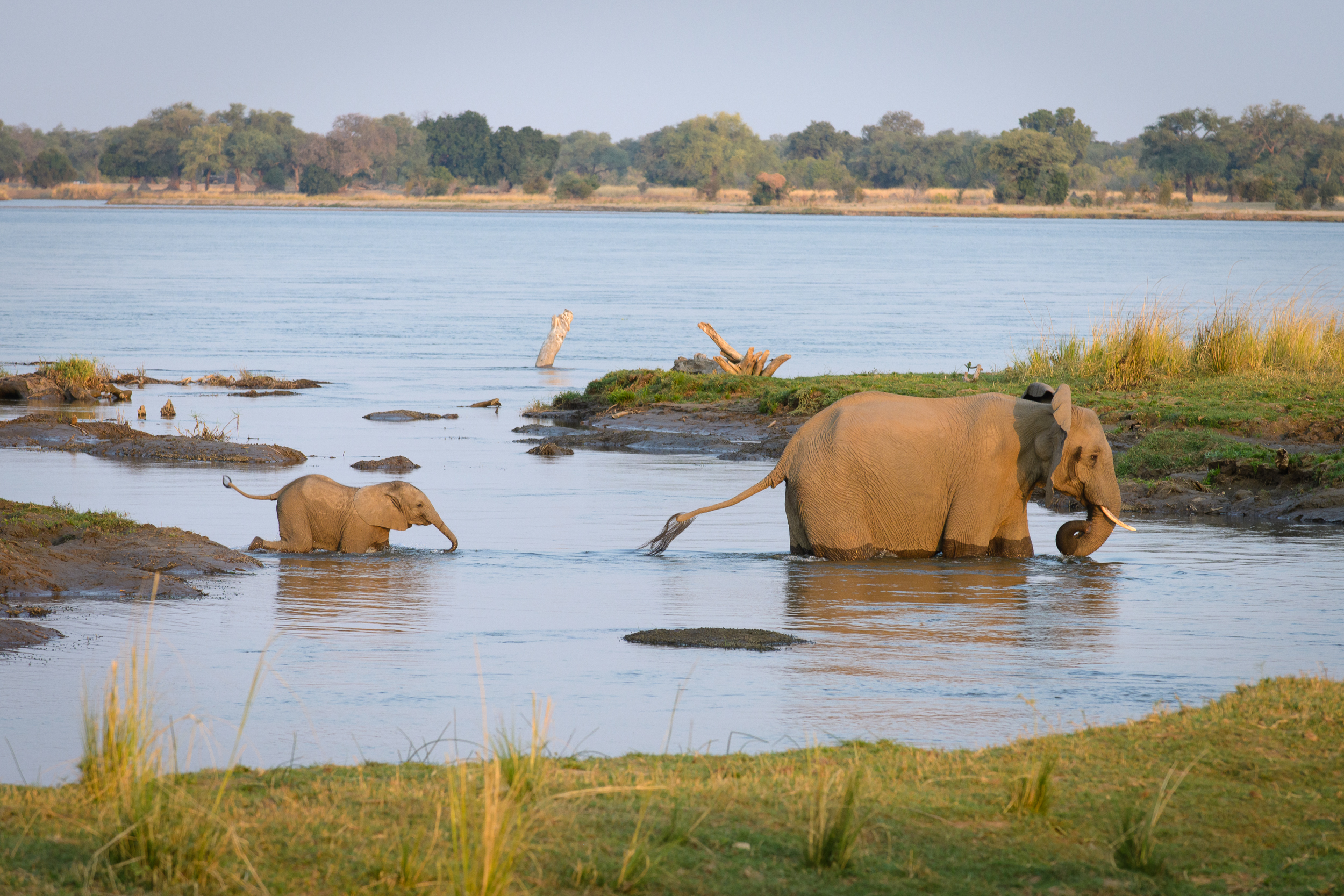 Zambia-2326.jpg