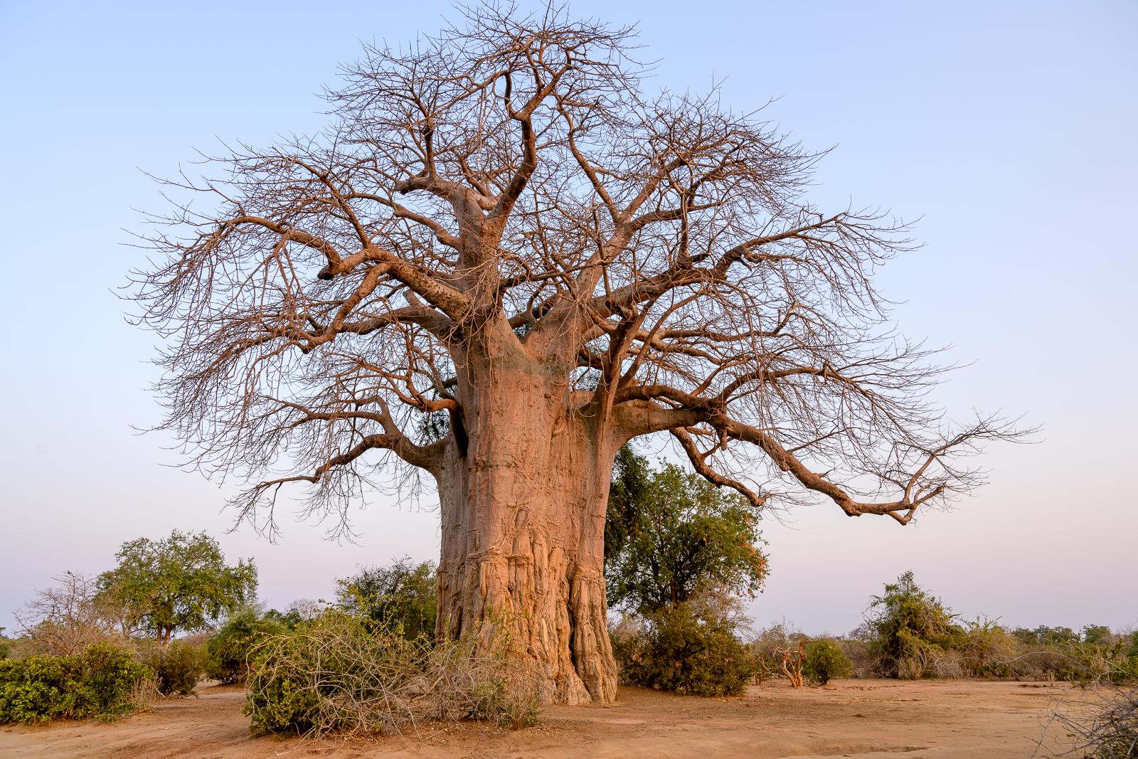 Zambia-2343.jpg