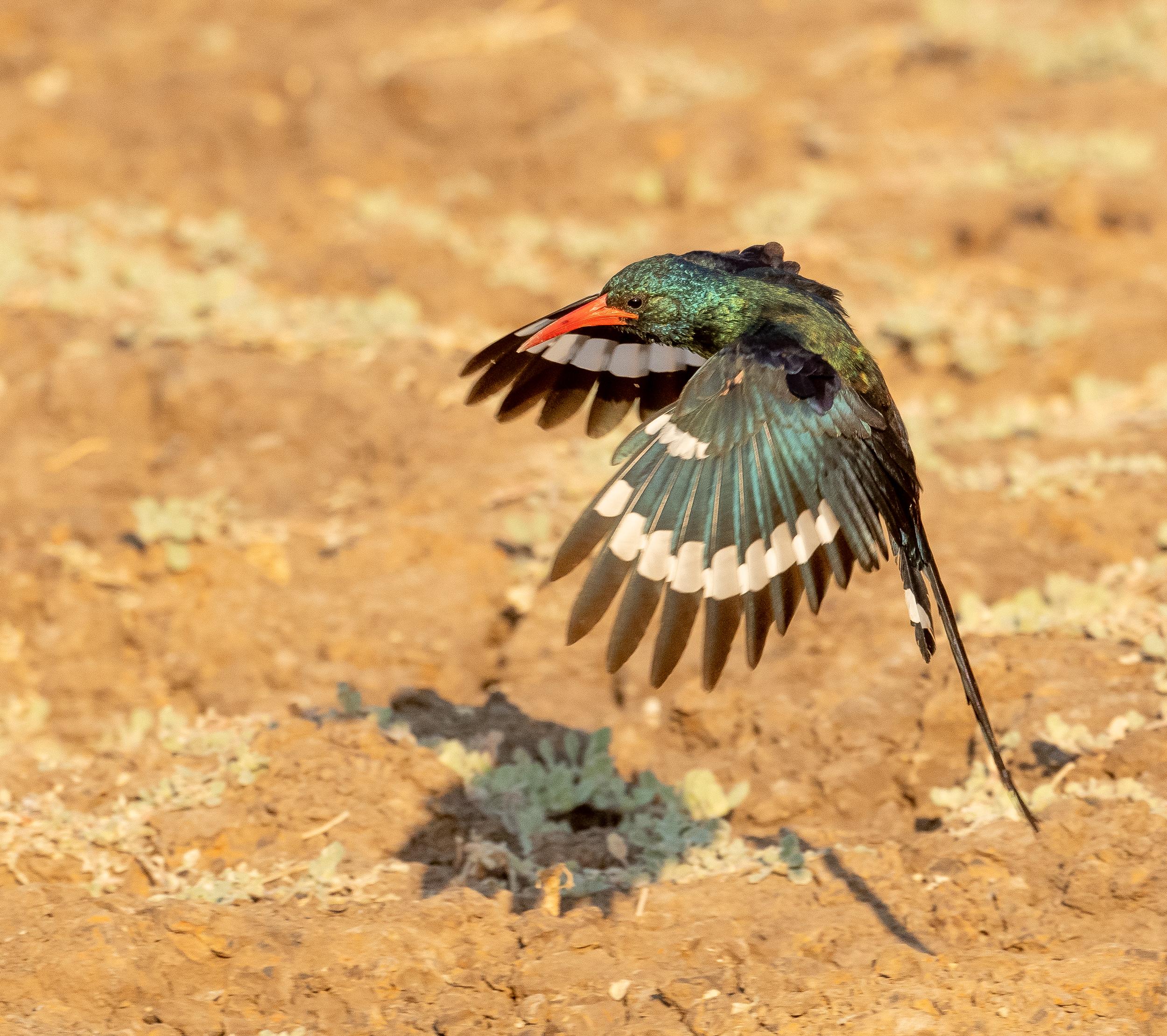 Zambia-4910.jpg