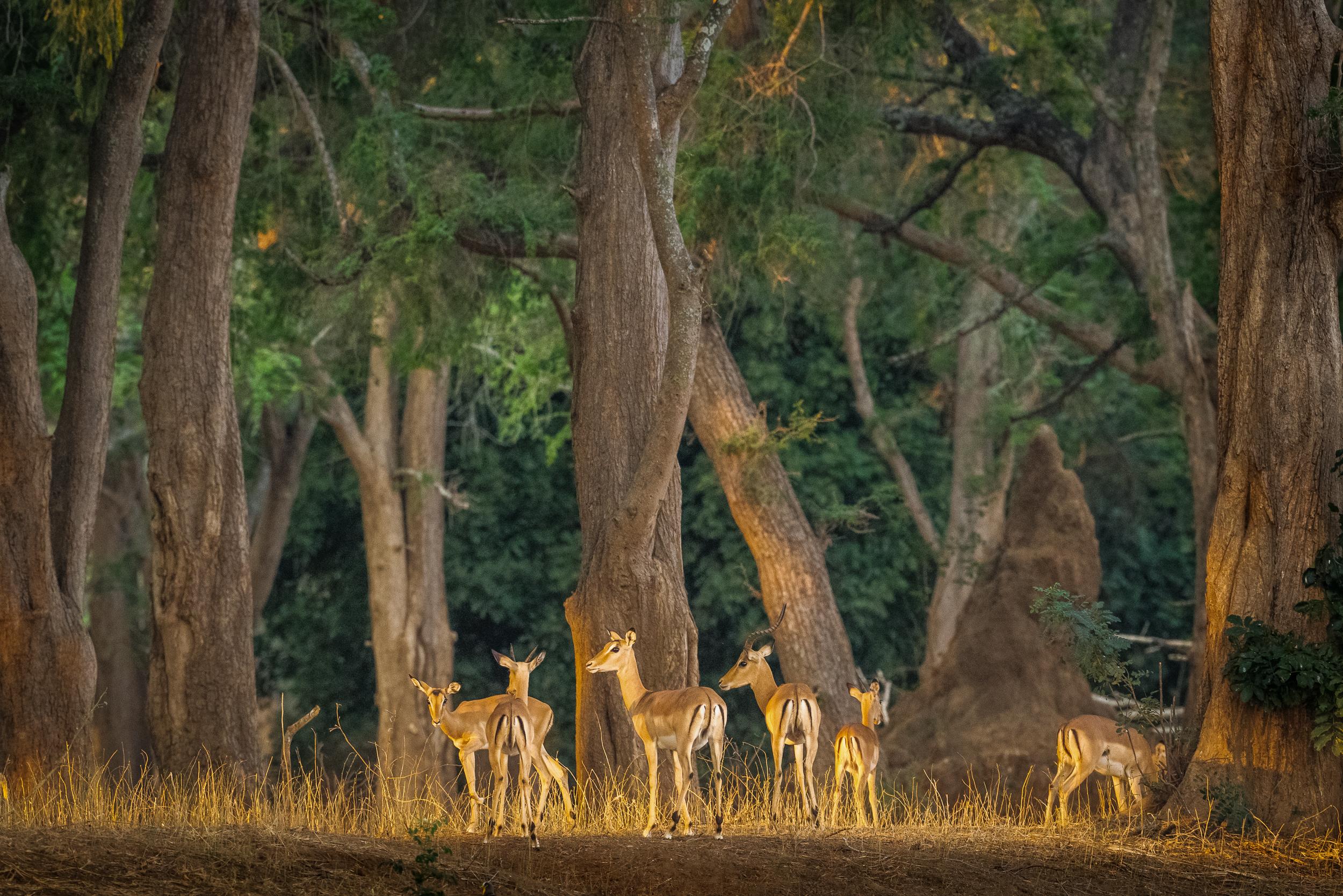 Zambia-5465.jpg
