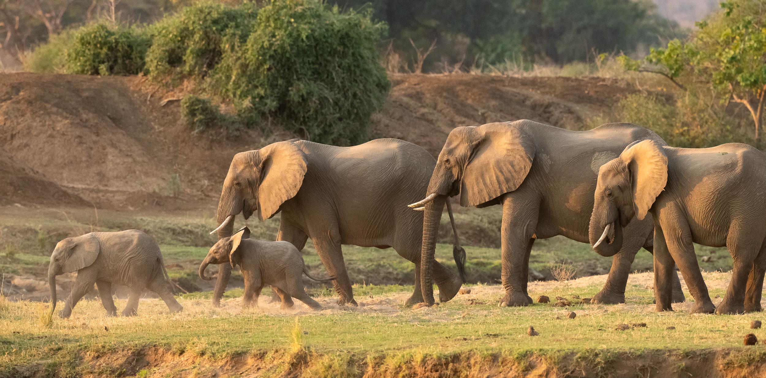 Zambia-5578.jpg