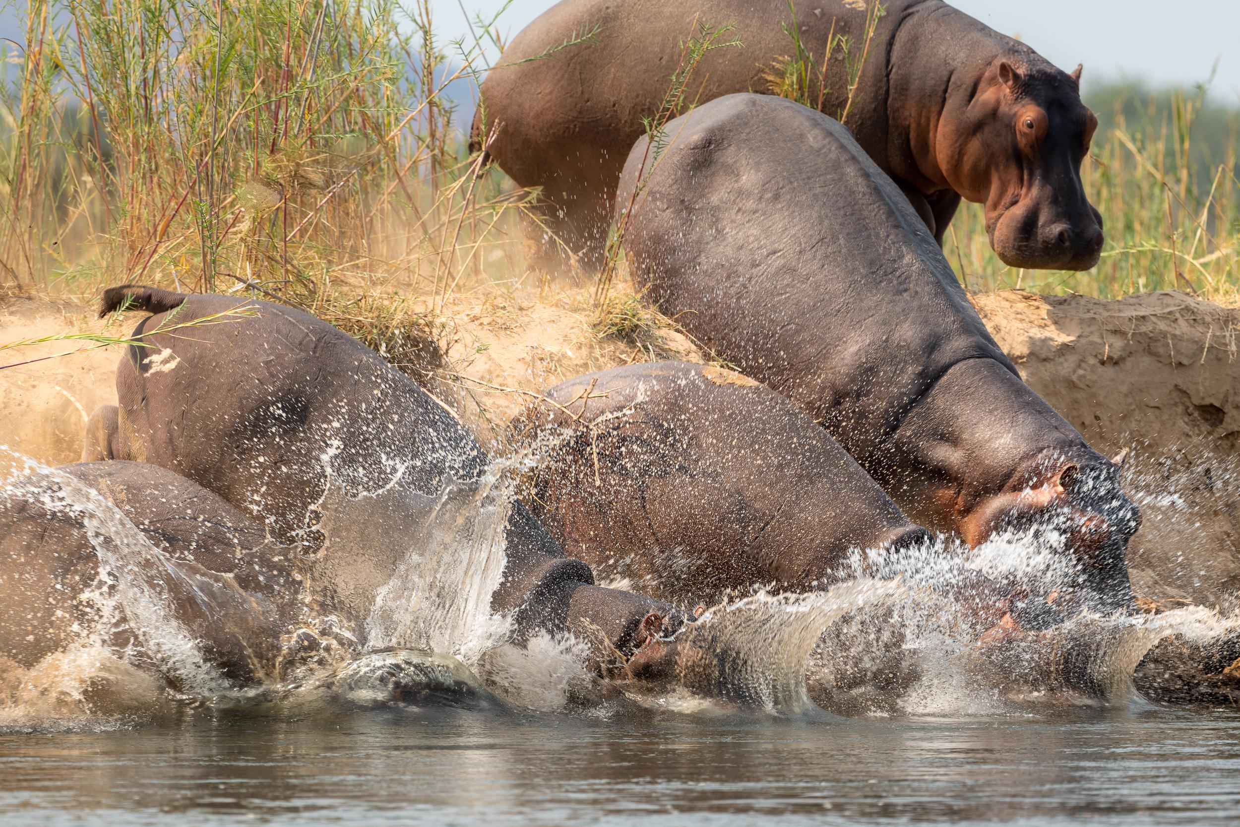 Zambia-5651.jpg