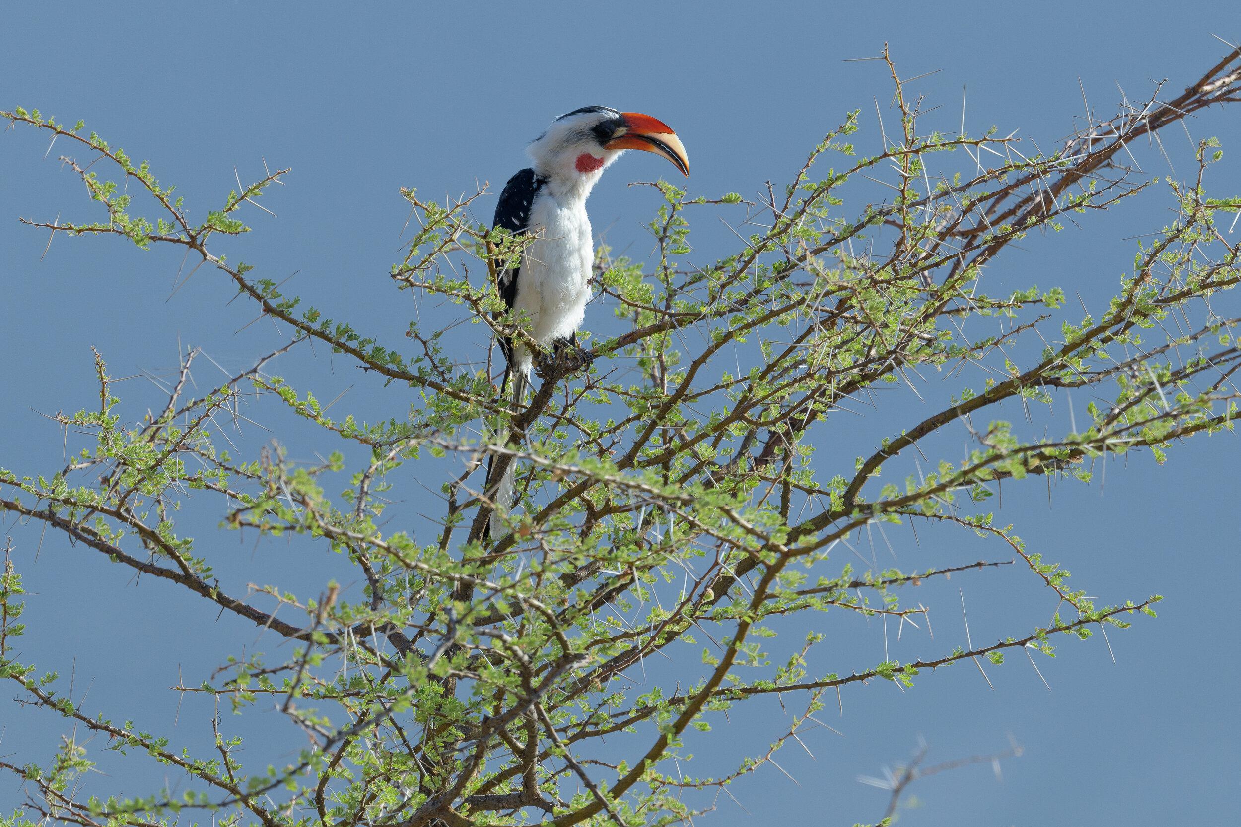 Kenya-2746.jpg