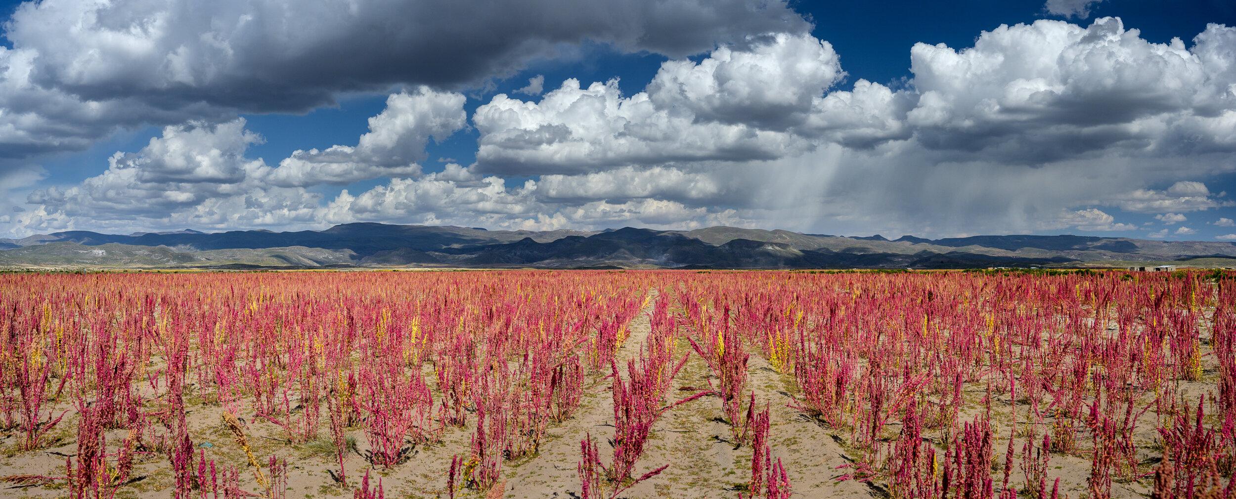 Bolivia-6914-Pano.jpg