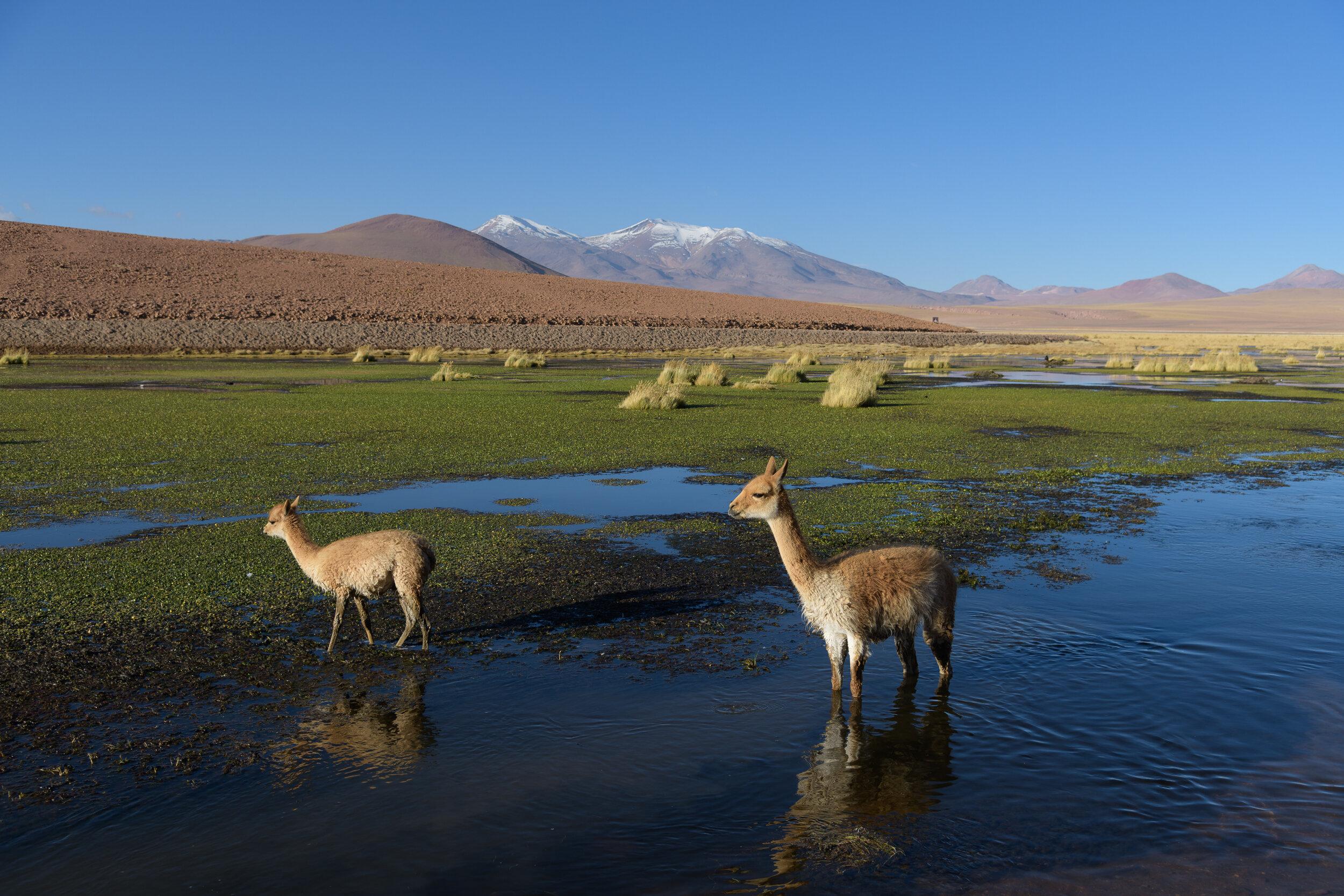 Atacama18-6635.jpg