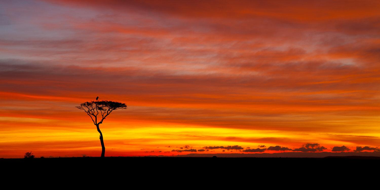 muench-workshops-kenya-safari.jpg