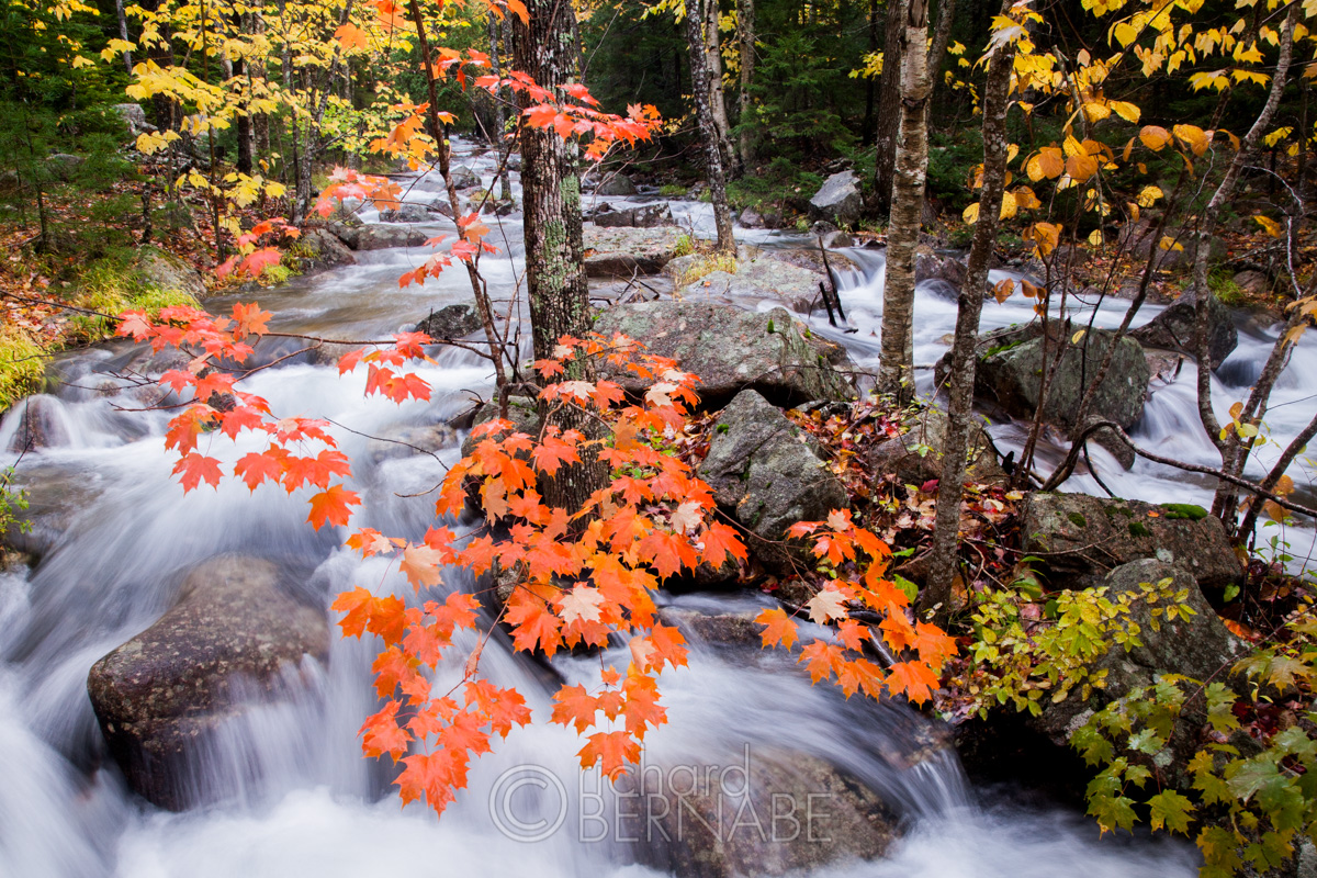 Autumn foliage along Jordan Stream, Acadia National Park, Maine