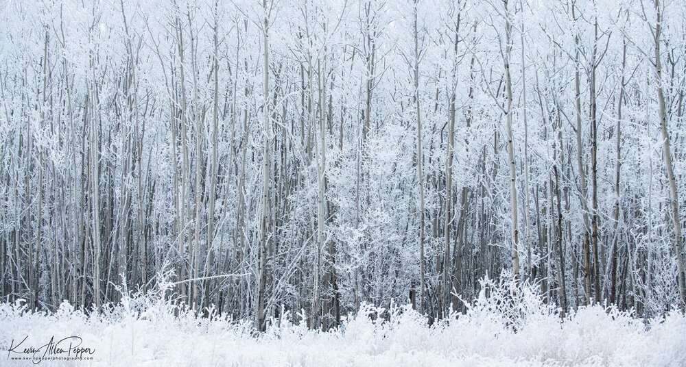 Fresh snow and bare tree limbs set a wintry mood.