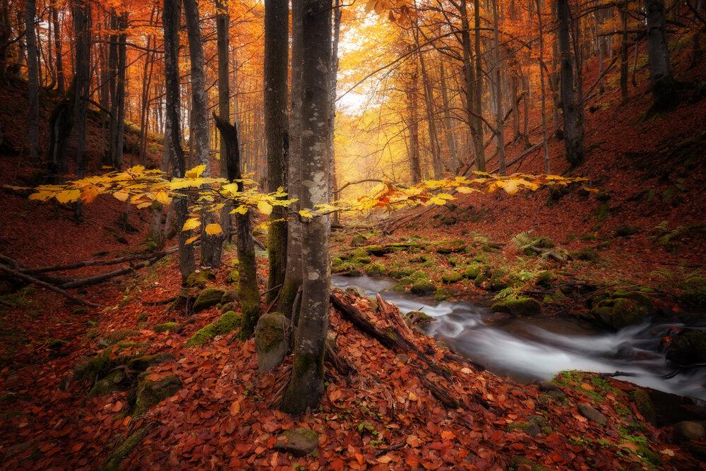fall colors.jpg
