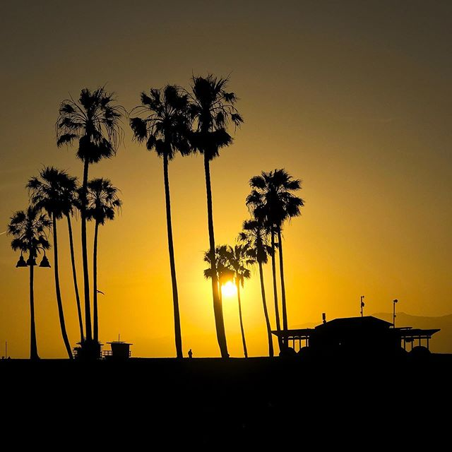 Two years ago I spent a few days at Venice Beach soaking in views and moments like this. Need to get back there soon. Or have have the weather get & stay nice here in Chicago. Both, really. #latergram  #venicebeach #sunset #california #losangeles #la #ca #cali #venicelife #venicesunsets #Venice_Sunsets #veniceboardwalk #palmtrees #socal #californiadreaming #californiaadventure #cityofangels #discoverla #westcoast #conquer_la #LAstory #californiacaptures #conquer_ca