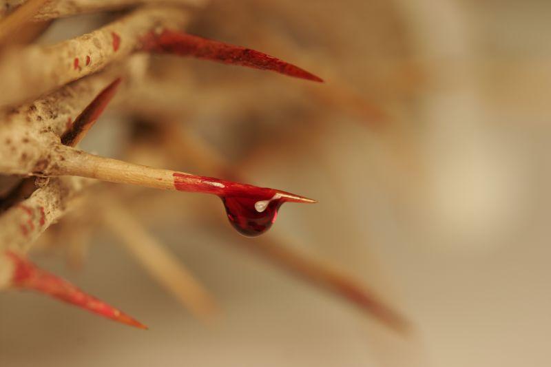 crown_of_thorns.jpg