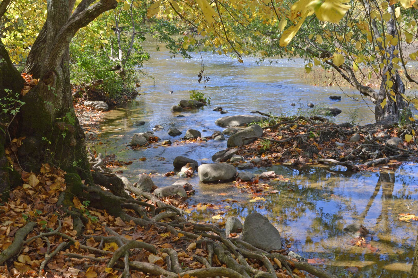 BDC_exposed-tree-roots-along-Darby-Creek_L-Williams.jpg