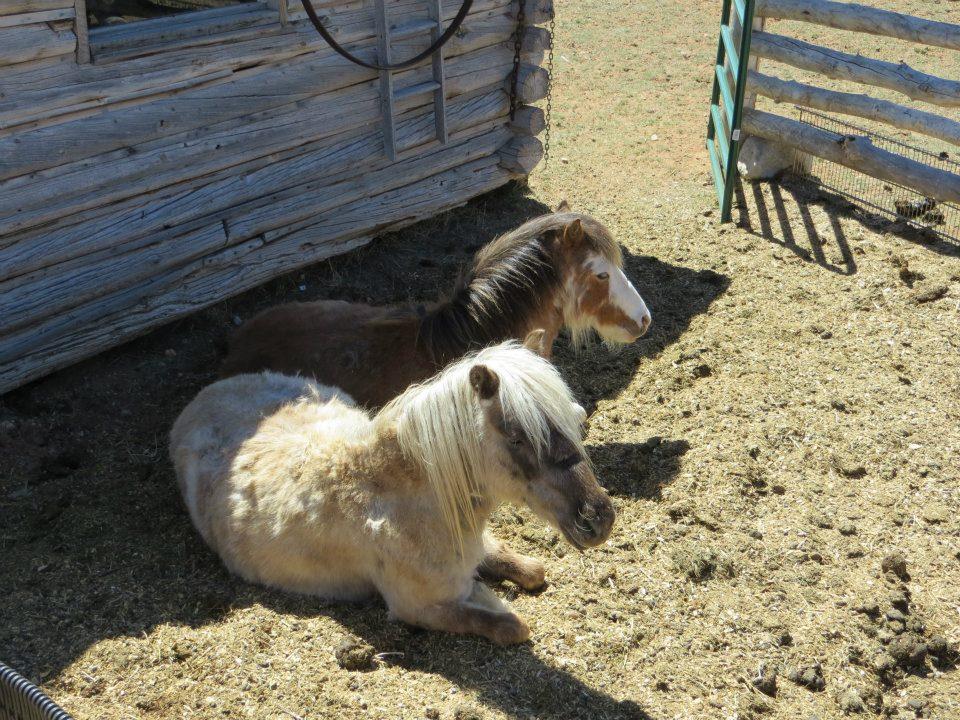 I saw ponies to pet, but no deer.