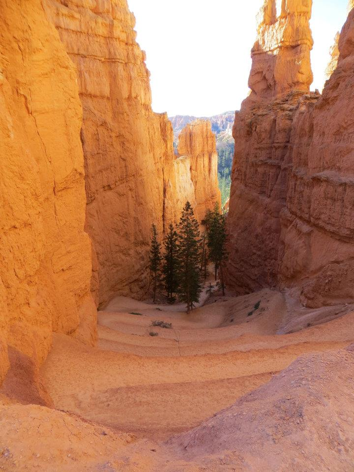 The hike started with switchbacks into the canyon.