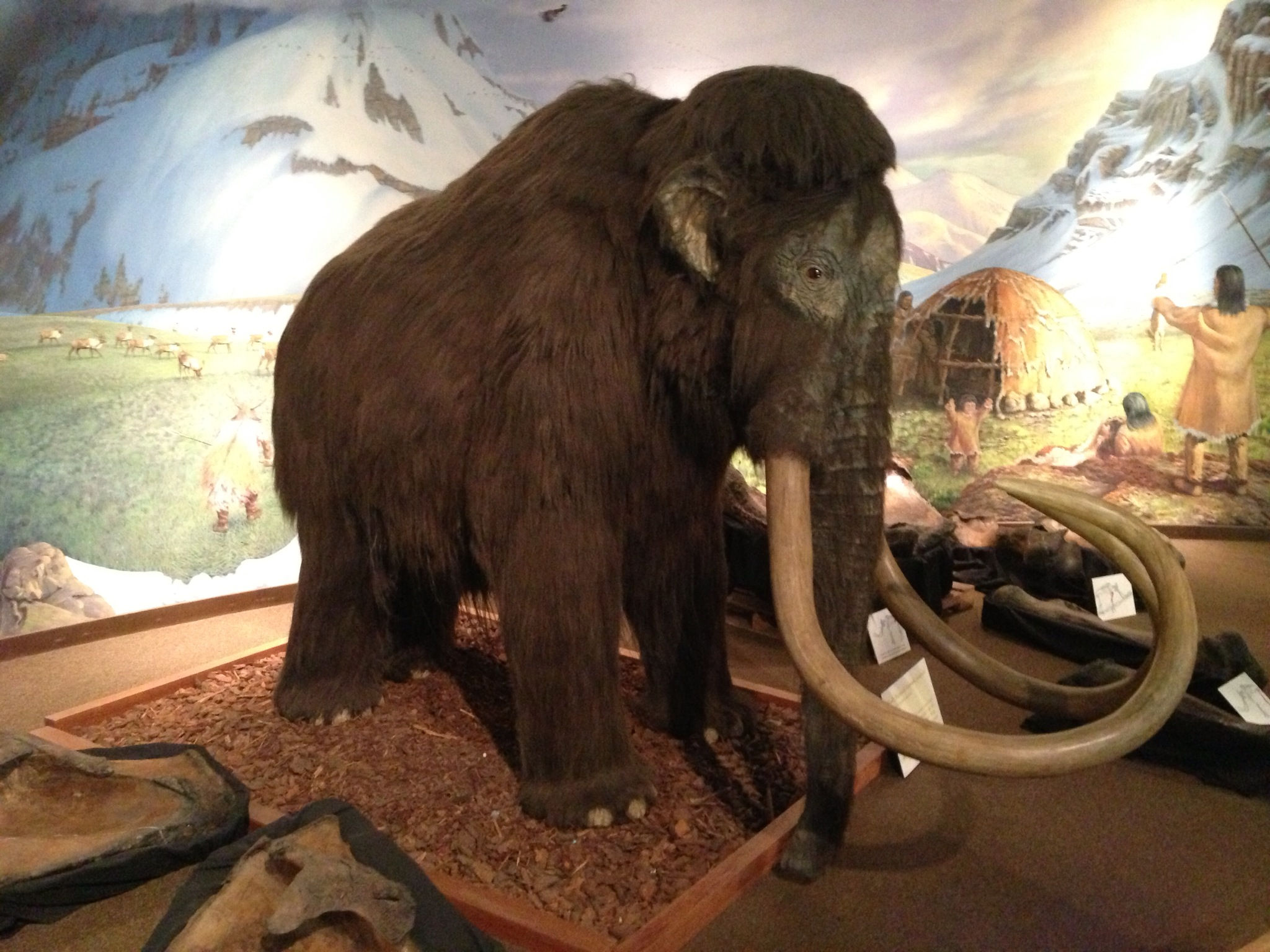 Mammoth animatronic. He sort of just jerked his head at odd intervals.
