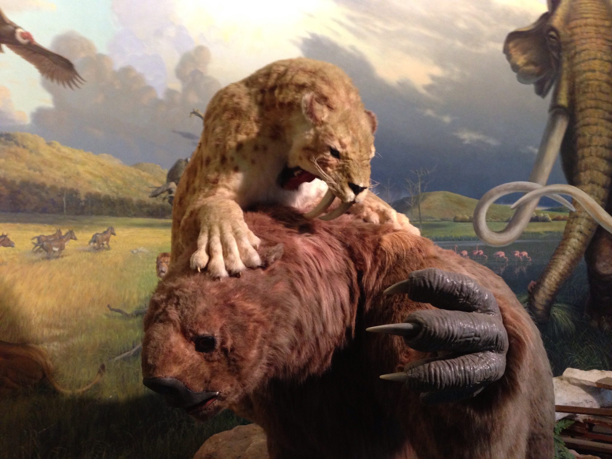 Sloth vs. Saber Tooth Cat