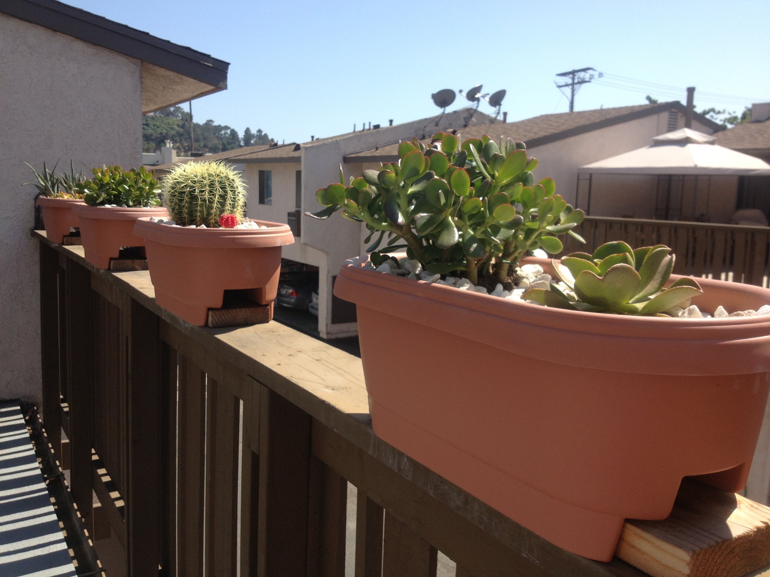 Our redone planter boxes.