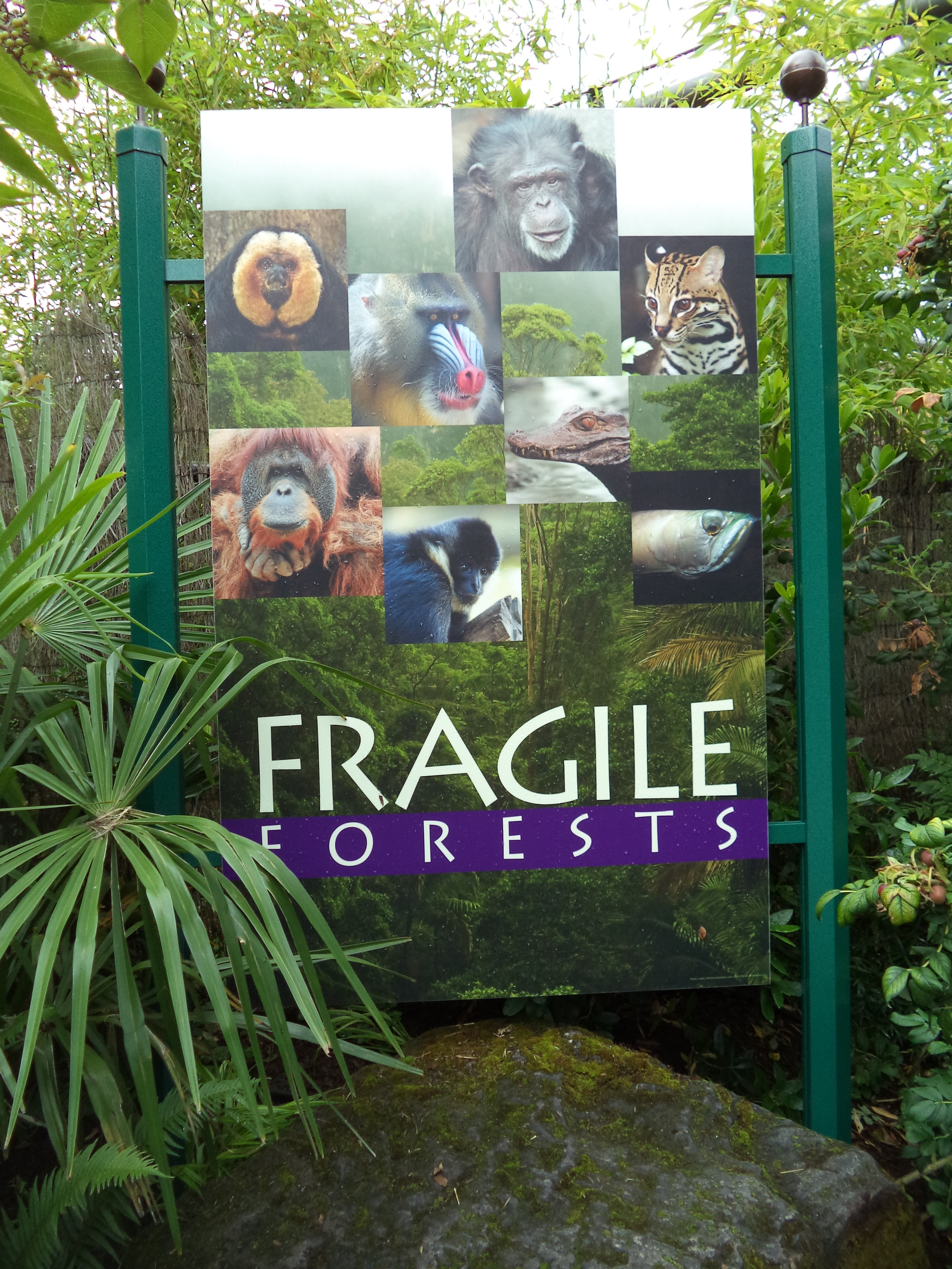 The Fragile Forests