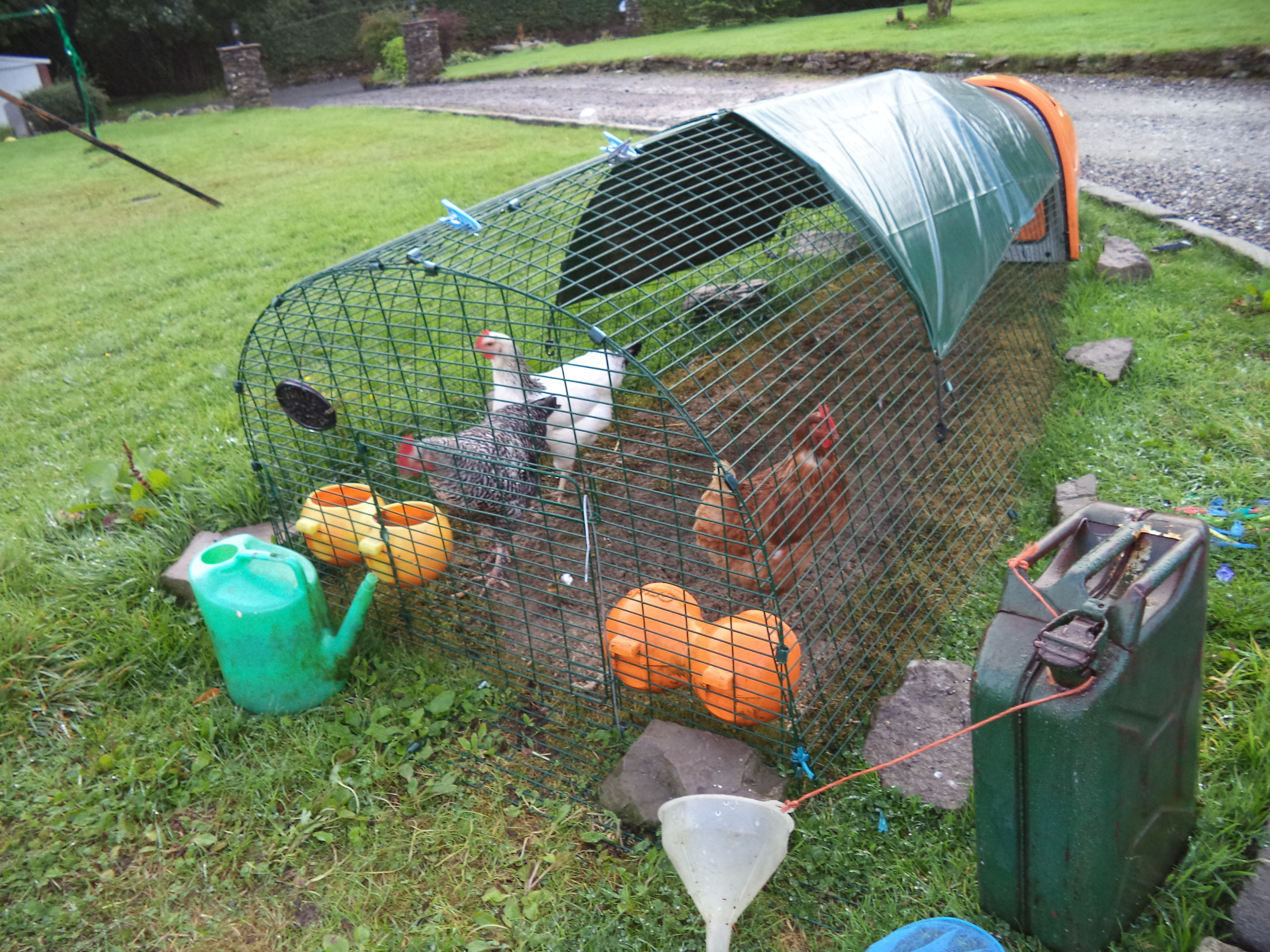The Chickens in their cool house!