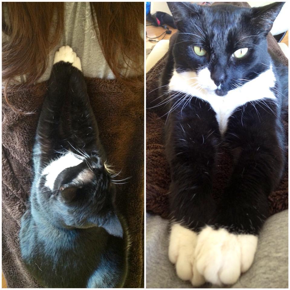 Cat cuddles make everything better.