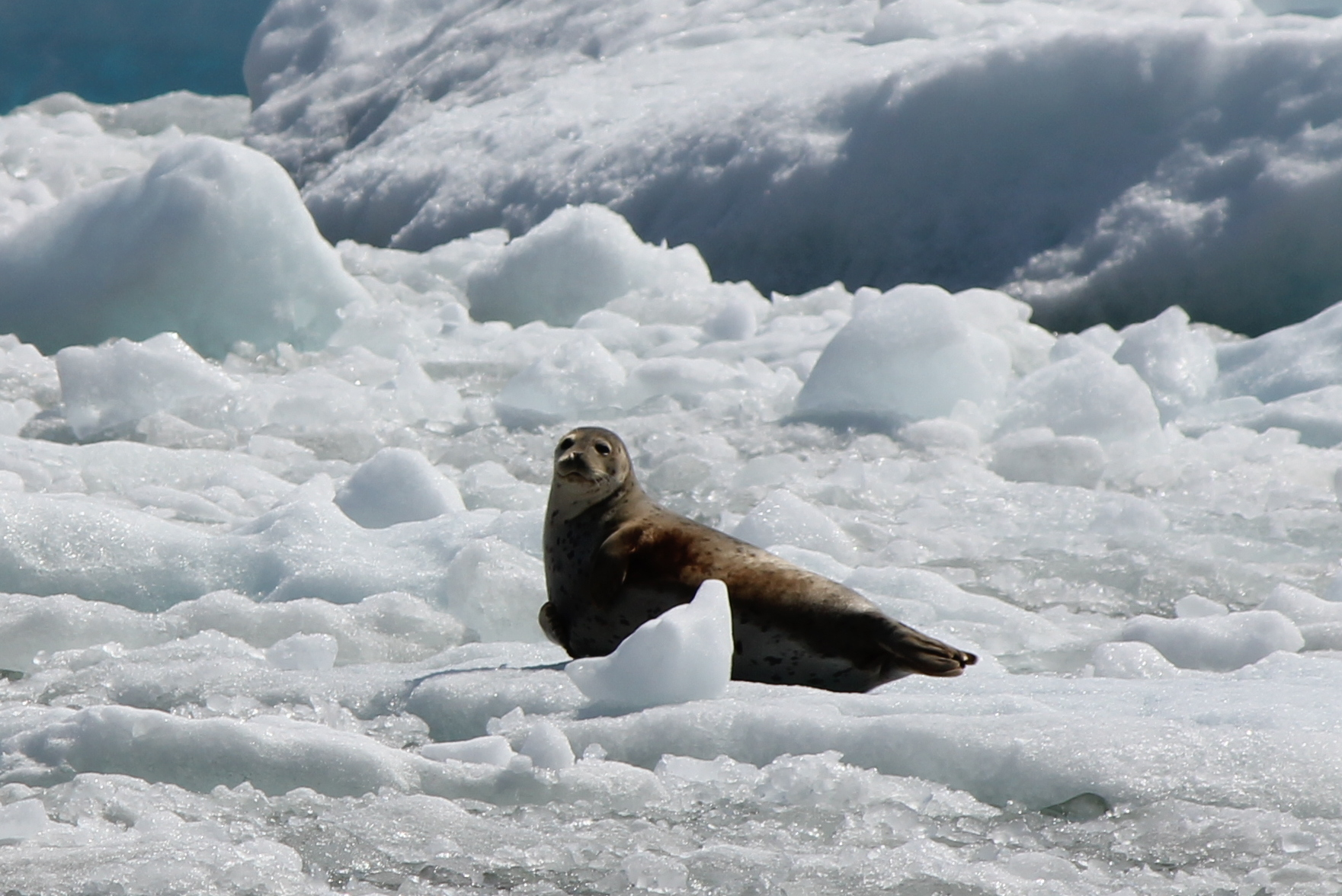 Seals are just dog mermaids. Think about it.