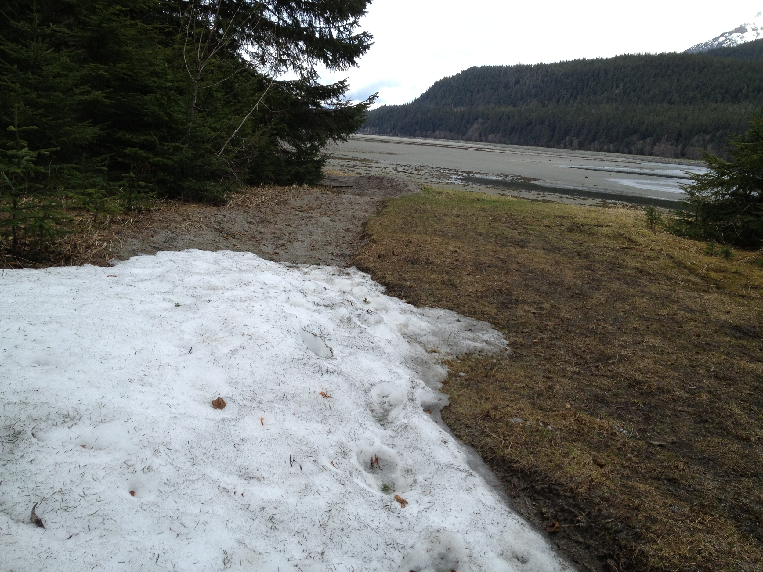 Snow at Echo Cove (north of Juneau) on May 17, 2013.