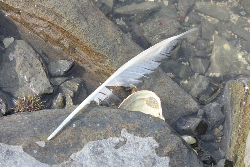 Another lucky feather.