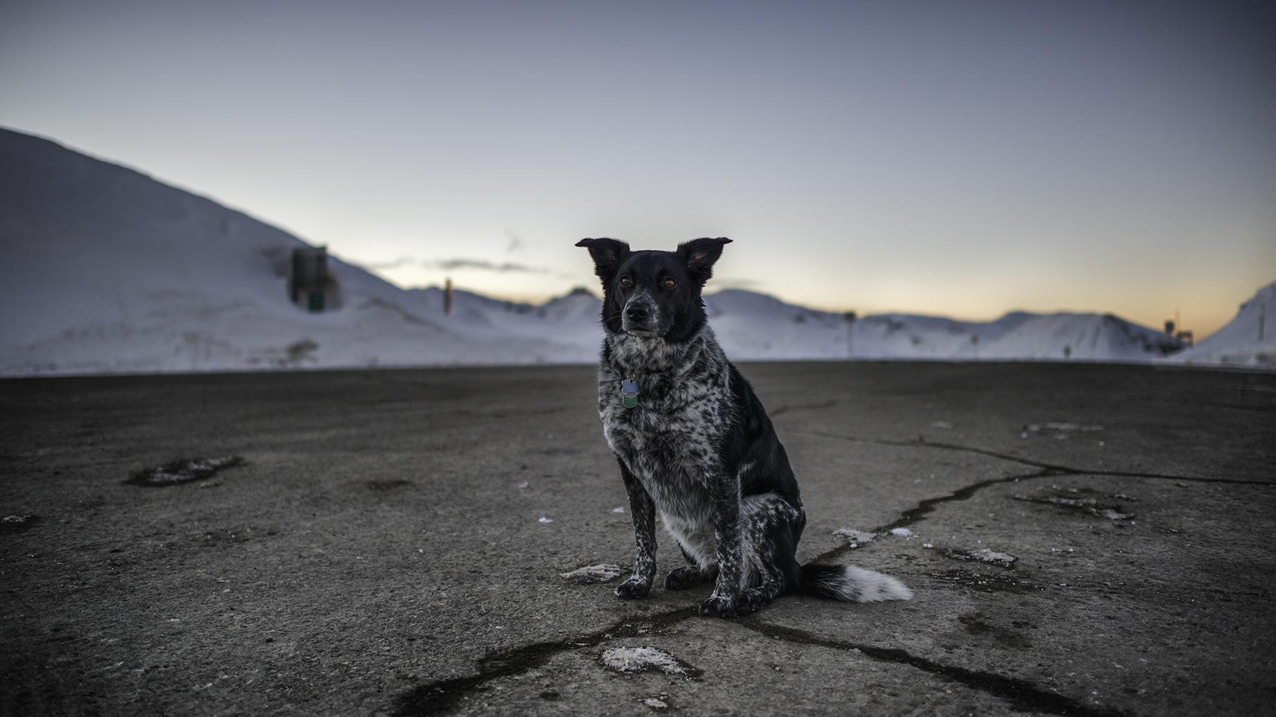 Anonymous dog sat upon Loveland Pass at sunset.