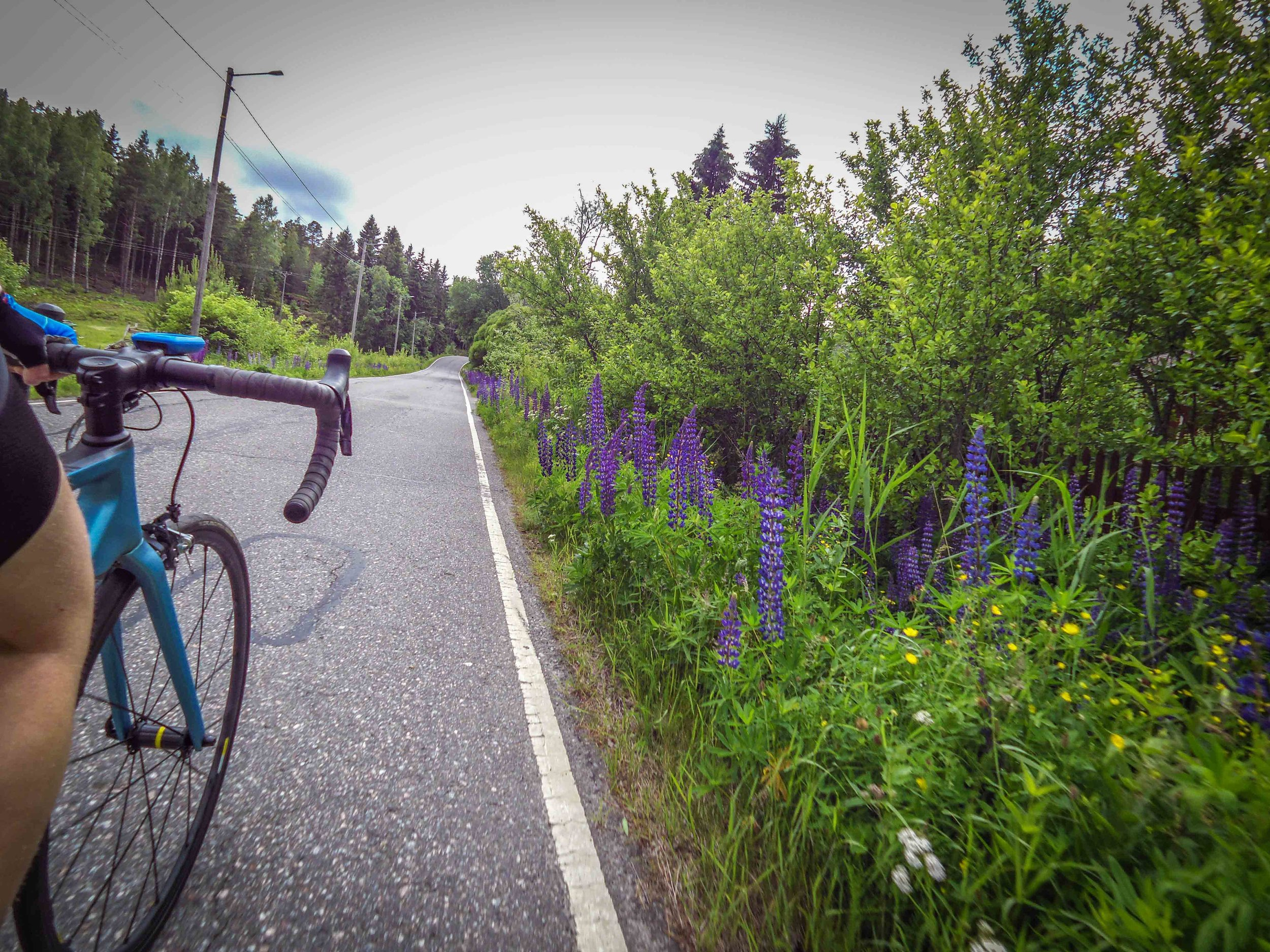 One of the most beautiful routes in Turku is the route around Kakskerta. Just before midsummer, the side of the road is filled with colorful lupines.