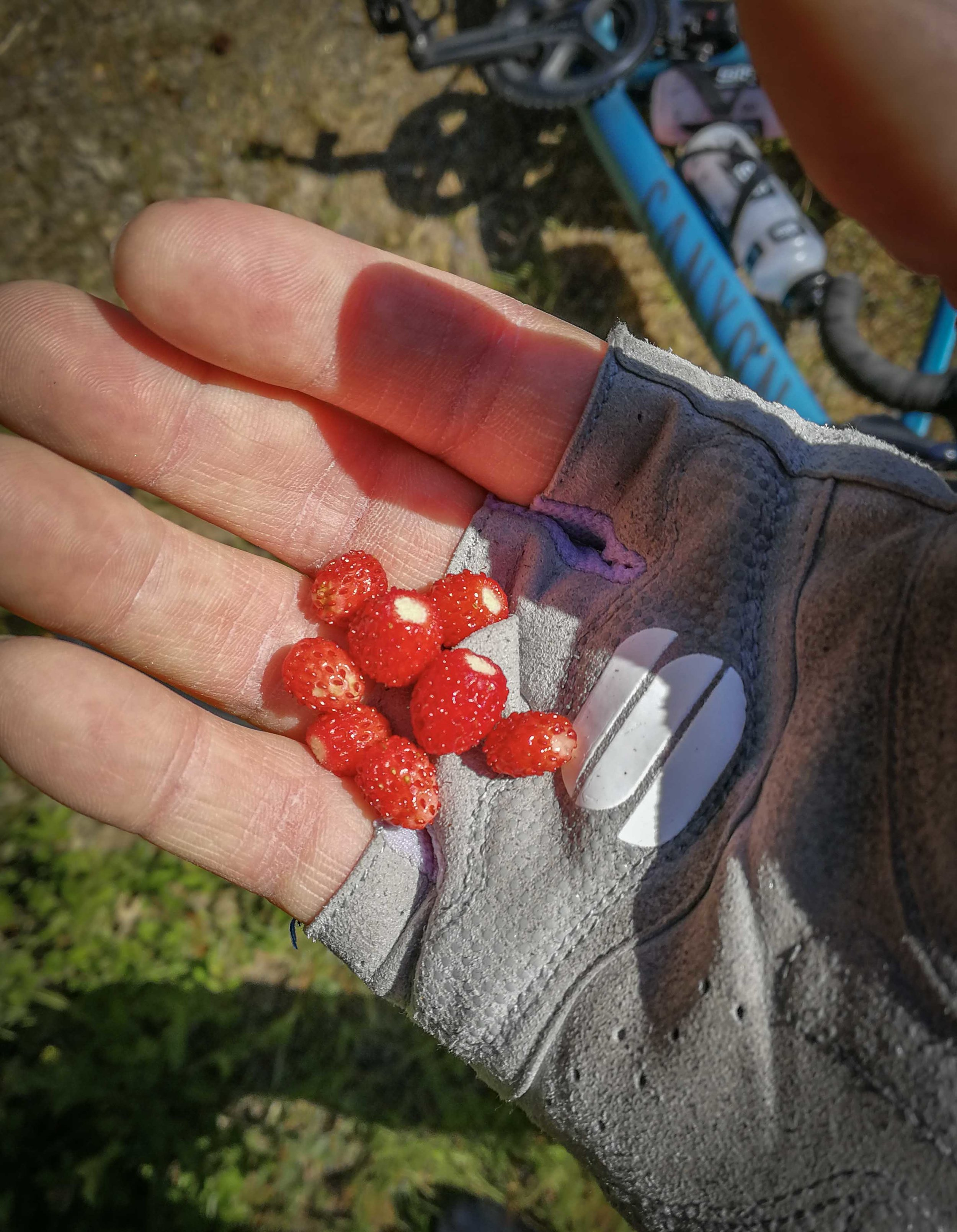 On my latest ride, I finally found wild strawberries. This really means summer for me, it's kinda childish, but this really is a ritual for me. No summer without eating these during a ride.