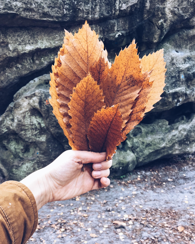 autumn landscape by ninotschka