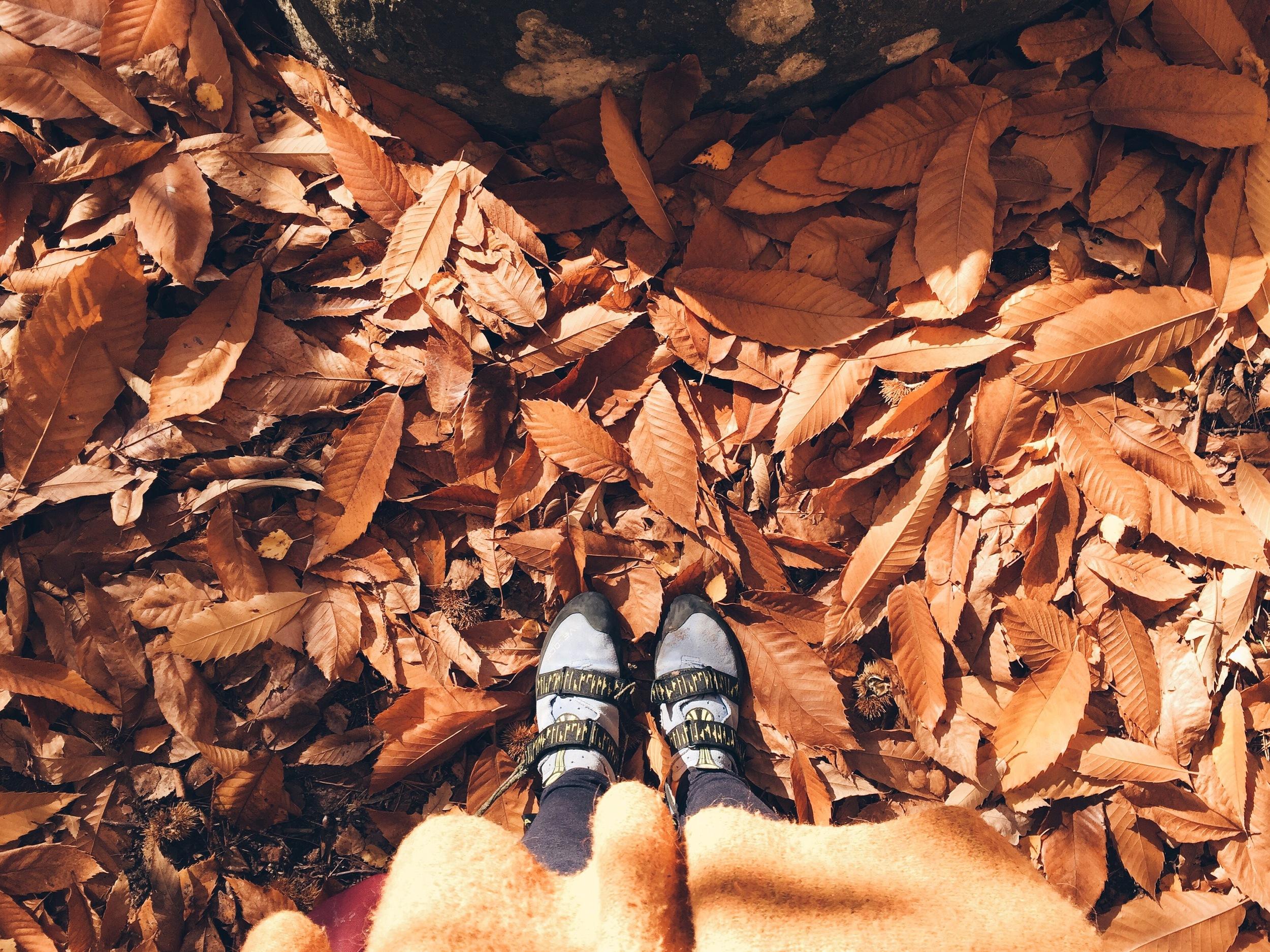fromwhereistand autumn ninotschka
