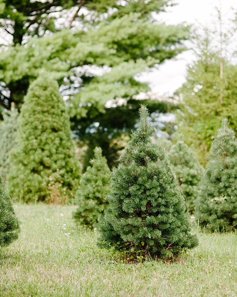 Sera Petras Photography Mini Sessions at Carter Coffman Tree Farm