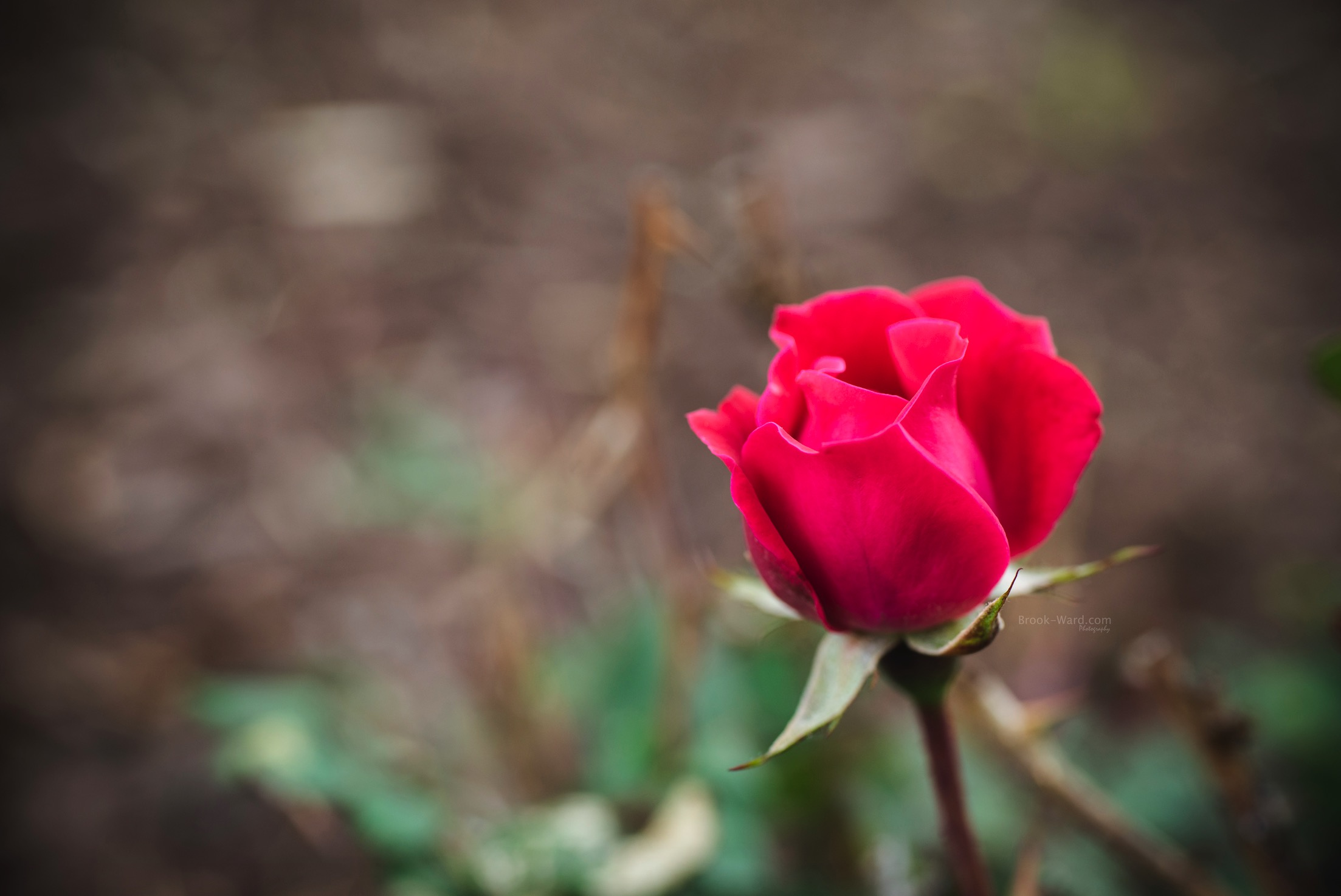 2nd Yard Flower