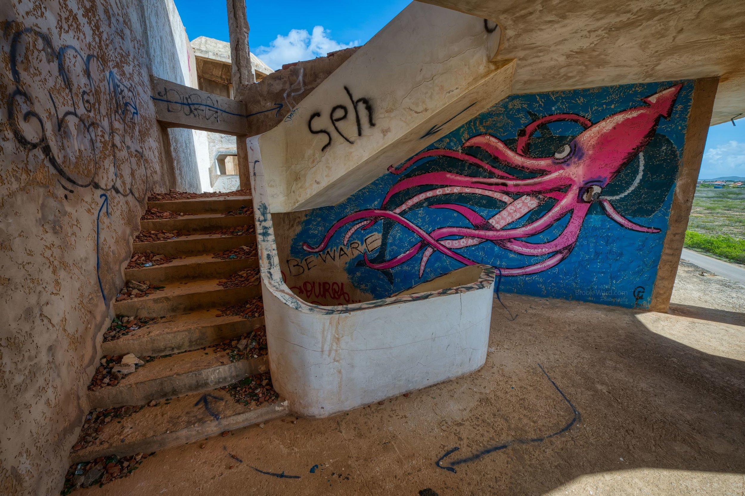 Bonaire Squid