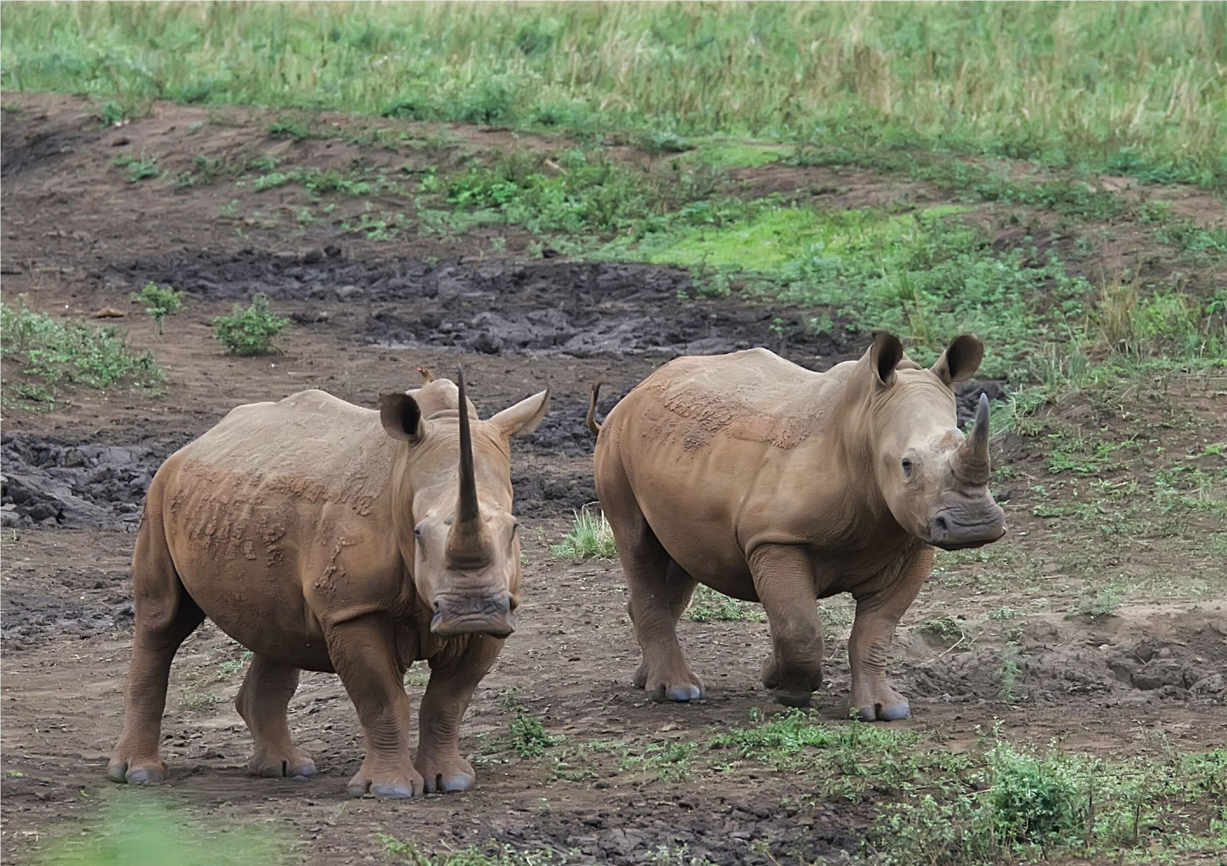 47093 Safari - South Africa 2017 wm.JPG