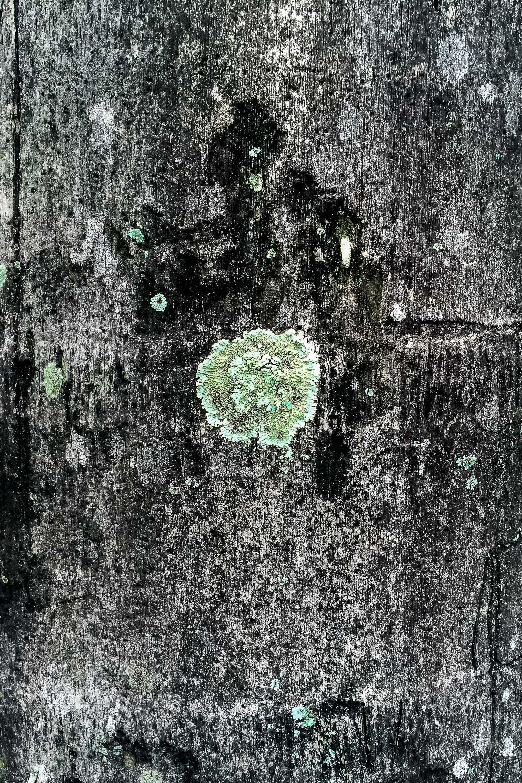 palm_tree_9.jpg
