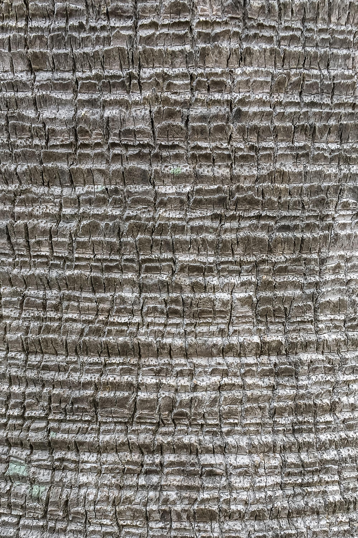 palm_tree_15.jpg