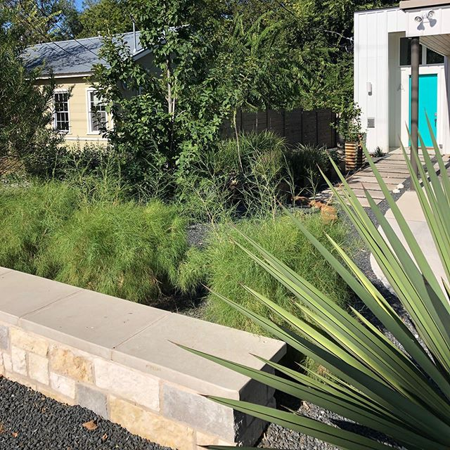 Nice filtered view of the front door. Make everyday a plant adventure in your front lawn. #xeriscape #xeriscapes #xeriscapegarden #landscapingideas #landscaping #landscapedesign #designbuild #atx #austintexas #austintx #78704