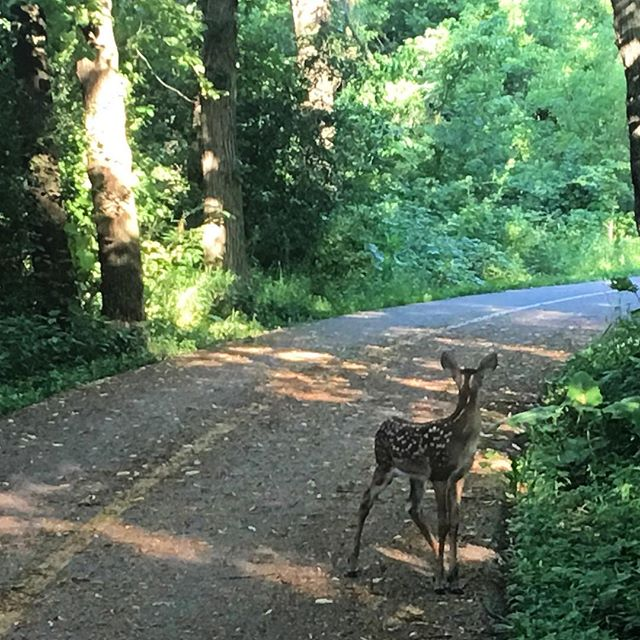 #Bambi on the #biketrail