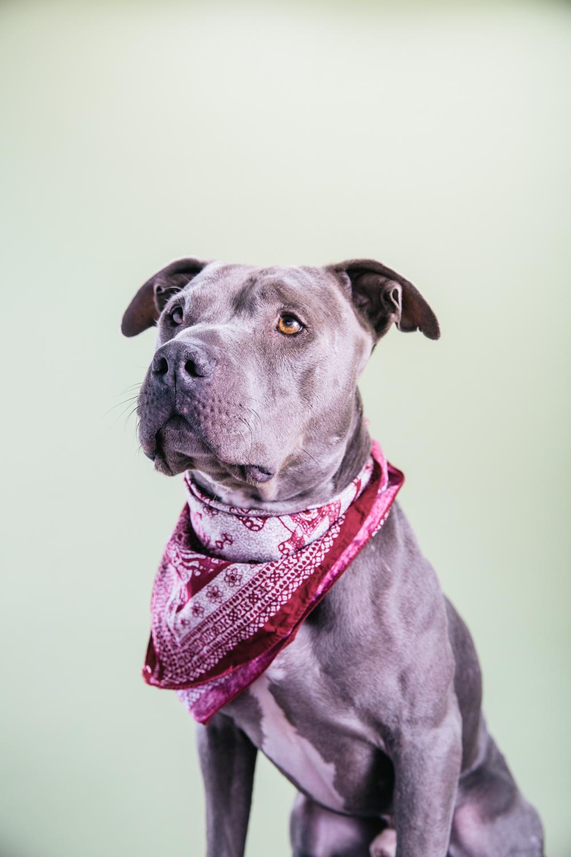 Smolowe_CHEWSLIFE_Dogs-82016.jpg