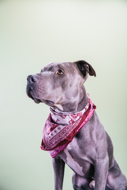Smolowe_CHEWSLIFE_Dogs-92016.jpg
